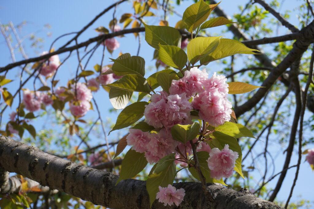 名前は分からないけど、可愛い花