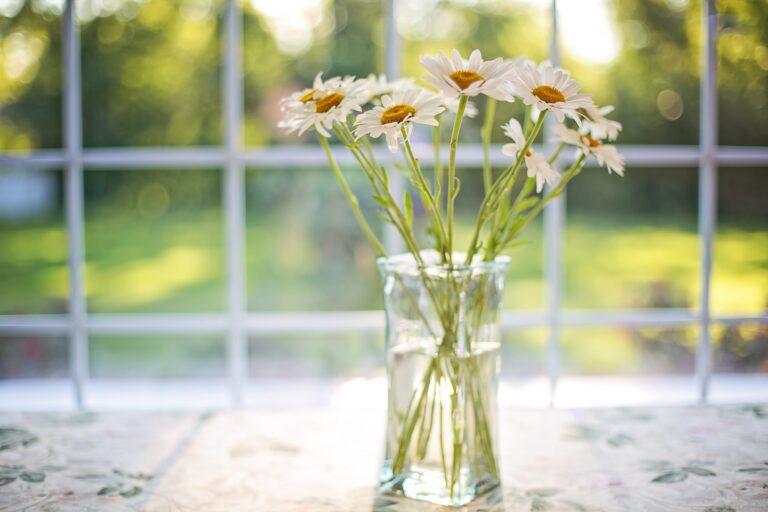 朝の光と花