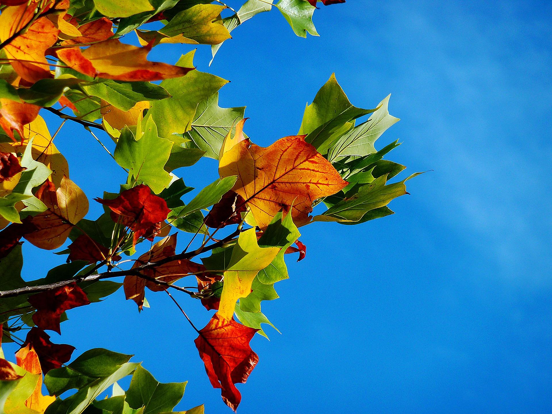秋の空と少し紅葉しはじめた葉